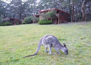 Jenolan Caves Cottages - Kingaroy Accommodation