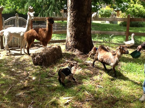 Beechworth Wildlife Stays - Kingaroy Accommodation