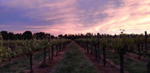 Milawa Vineyard Views - Kingaroy Accommodation