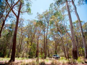 Coolah Tops National Park Camping - Kingaroy Accommodation