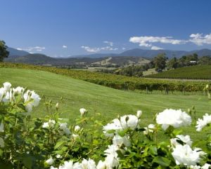 Balgownie Estate Vineyard Resort and Spa - Kingaroy Accommodation