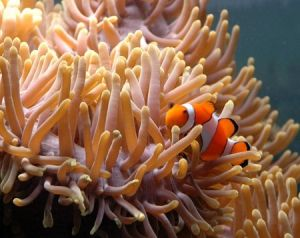 Reef HQ Great Barrier Reef Aquarium - Kingaroy Accommodation