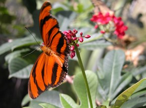 Butterfly Farm - Kingaroy Accommodation