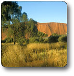 Uluru - Kata Tjuta National Park - Kingaroy Accommodation