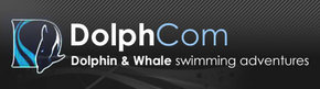 Dolphcom - Dolphin  Whale Swimming Adventures - Kingaroy Accommodation