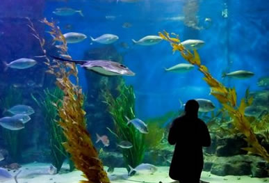 Melbourne Aquarium - Kingaroy Accommodation