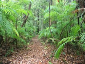 Delicia Road Conservation Park - Kingaroy Accommodation