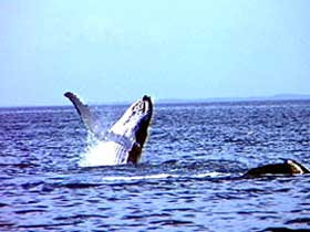 Whale Watching - Kingaroy Accommodation