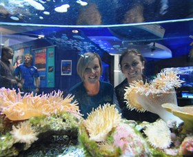 Solitary Islands Aquarium - Kingaroy Accommodation