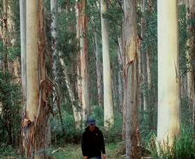 Blue Gum Forest - Kingaroy Accommodation