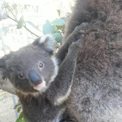 West Oz Wildlife Petting Zoos - Kingaroy Accommodation
