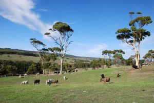 Lisieux Farm Bed and Breakfast - Kingaroy Accommodation
