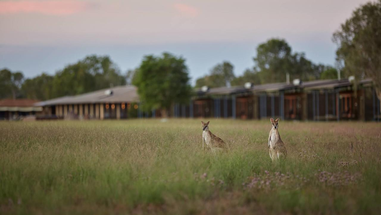 Wildman Wilderness Lodge - Kingaroy Accommodation